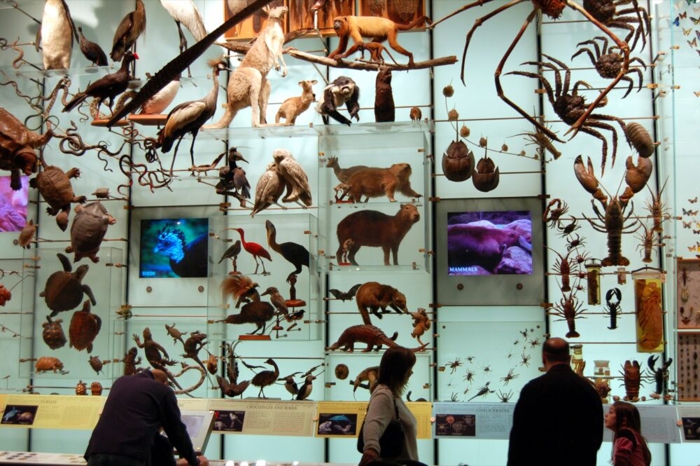 Biodiversity. Foto Dan McKay.